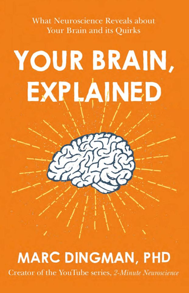 Your Brain Explained